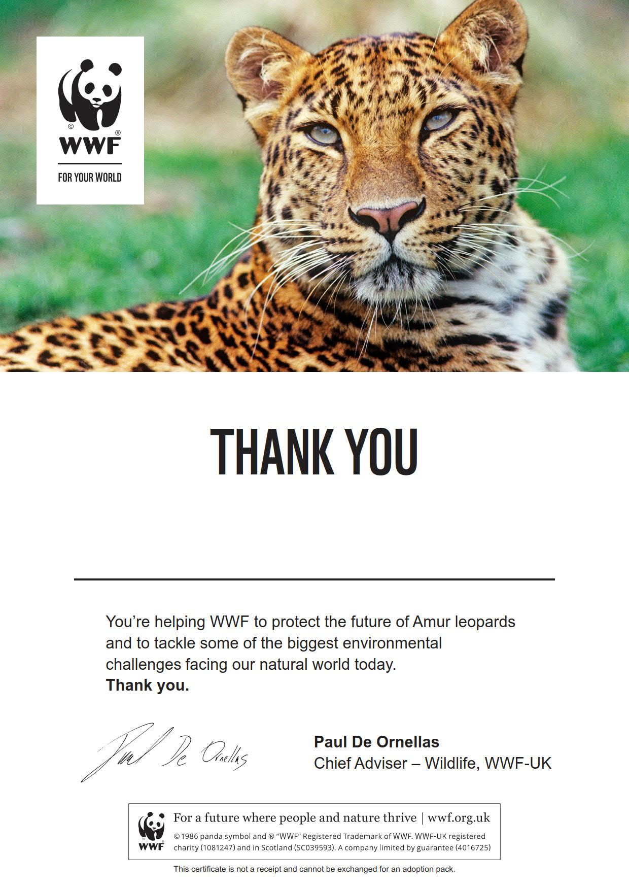 Amur Leopard Certificate