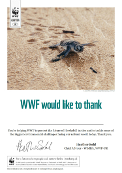 Turtle adoption certificate
