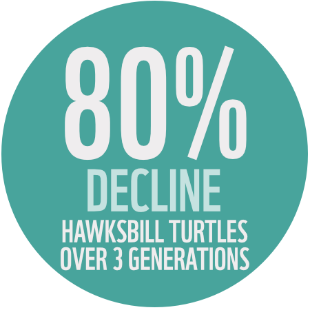 80% Decline in Turtles over 3 generations
