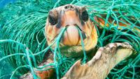A turtle caught in a fishing net