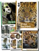 Amur Leopard Fact Pack