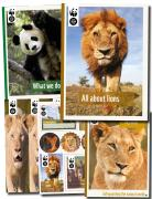 Lion Fact Pack