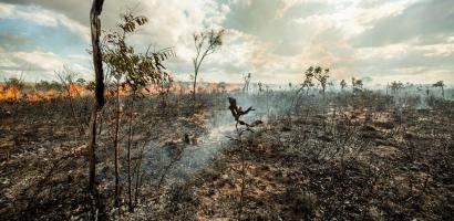 A forest in the Cerrado is almost fully burned down with barely any vegetation left. A fire still burns in the distance.
