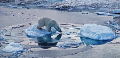 A polar bear on melting ice in the arctic