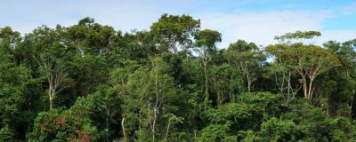View of Treetops in the Amazon