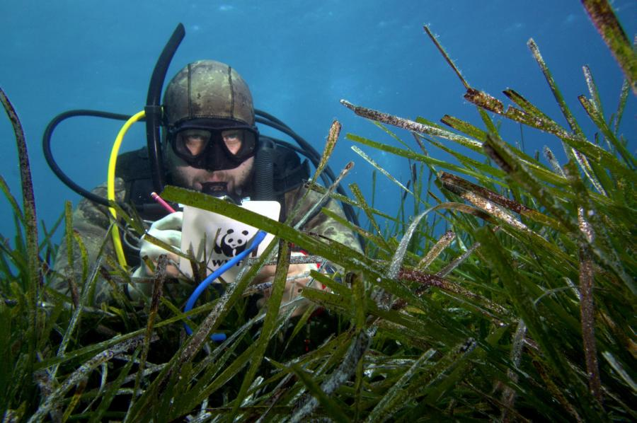 WWF Seagrass Project