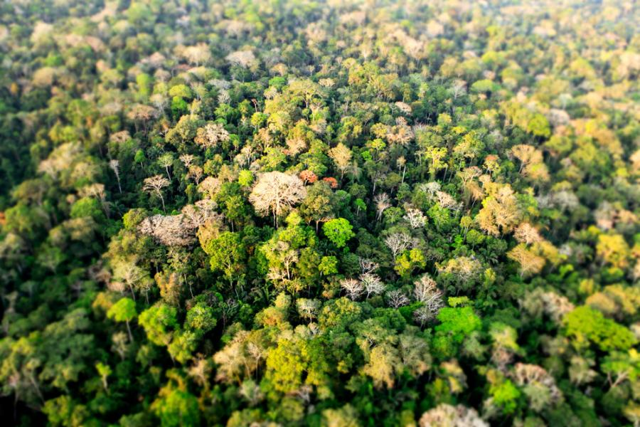 Arial Shot of Amazon Rainforest
