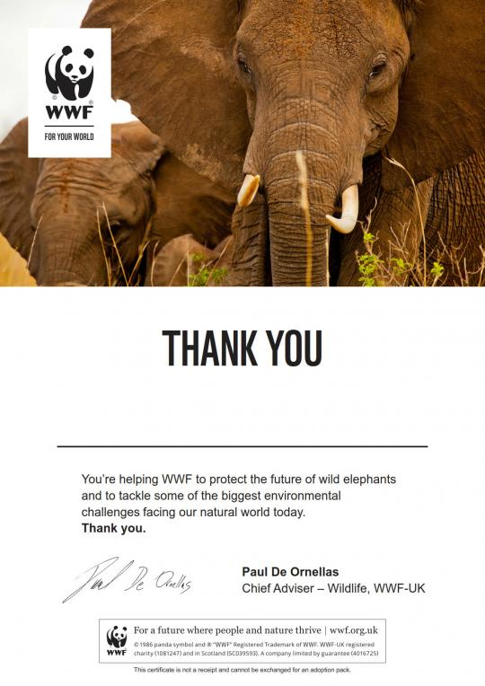 Elephant adoption certificate